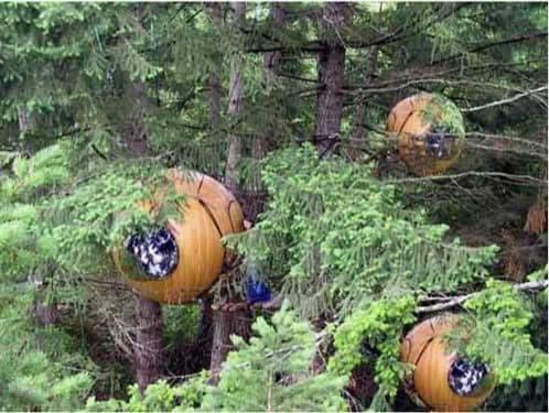 casas esfera en los arboles