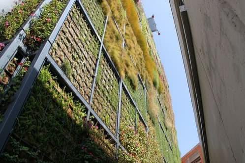 medianera cubierta con un jardin vertical