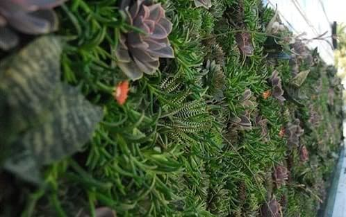 muro-con-jardin-vertical-restaurante