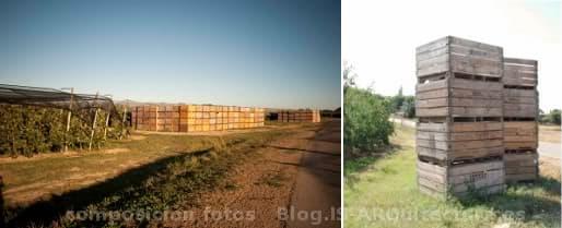 paisaje del Empordanese con cajas de madera para la recolecta de fruta