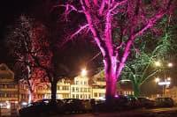 nanotecnología para hacer los árboles luminiscentes