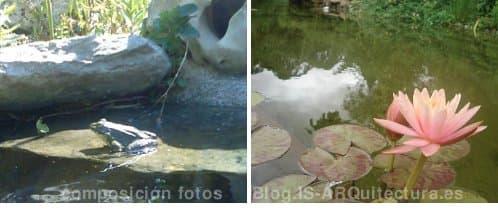 rana y nenúfares-piscina-natural