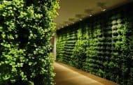Paredes vegetales de interior