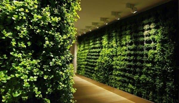 paredes vegetales Greeworks