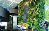 Jardin vertical en el vestíbulo de MSF Lisboa