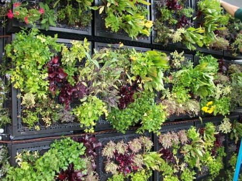 Tournesol-VGM-modulos-muro-vegetal