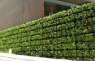 Tournesol: sistema de muros vegetales