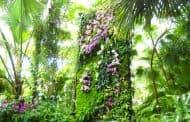 Jardines verticales de Patrick Blanc (Nueva York)