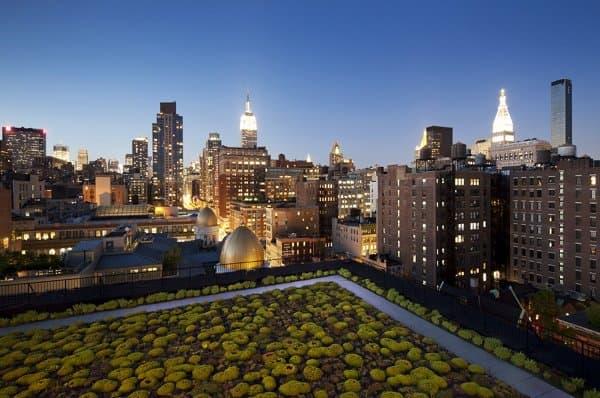 reforma-oficinas-Nueva_York-con-LEED-Platino-azotea sedum