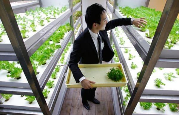 cultivos-hidroponicos-oficinas-Pasona-Tokio
