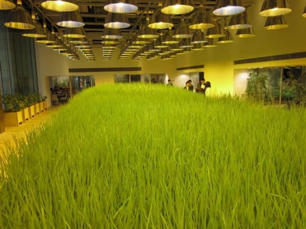 cultivos-oficinas-Pasona-Tokio
