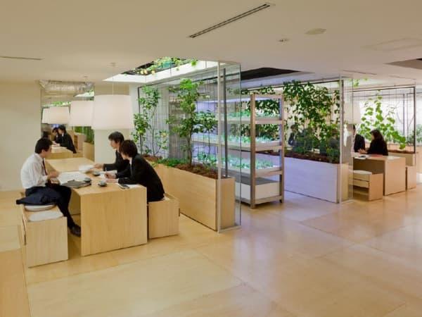 cultivos-y-espacios-de-trabajo-oficinas-Pasona