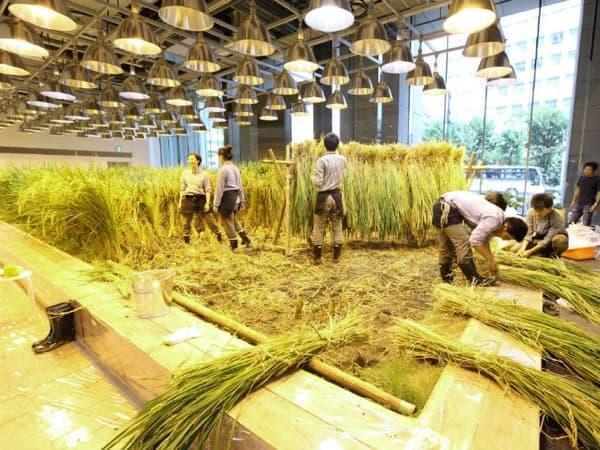 recolectando-cultivos-oficinas-Pasona-Tokio