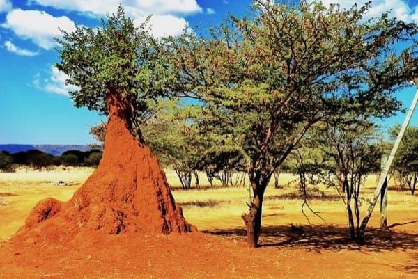 termitero