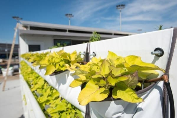 muro-vegetal-Casa-Israel-SolarDecathlon2013