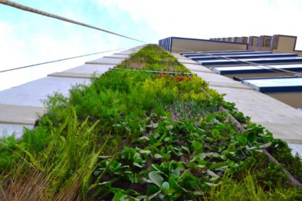 detalle-jardin-vertical-Medellin