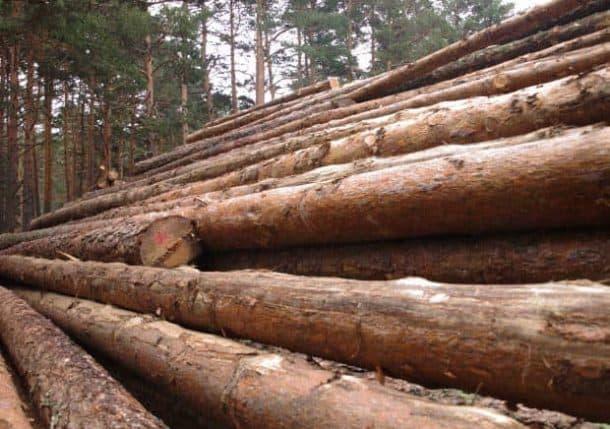 troncos-madera