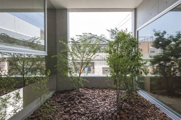 Casa_K-con patios ajardinados-arbustos