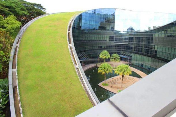 Escuela-Diseño-Nanyang-azotea-verde