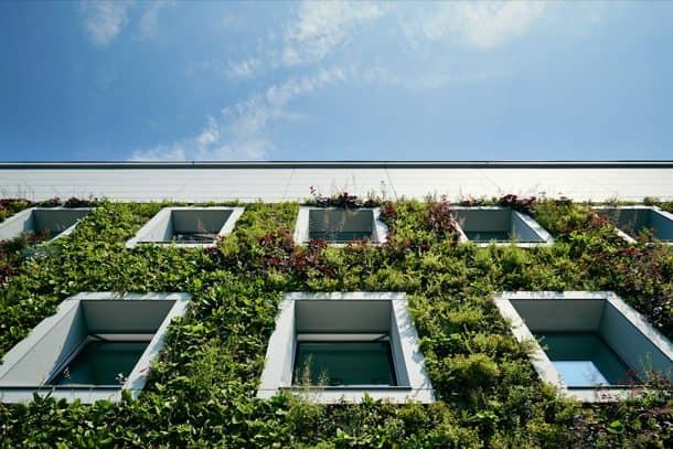 Fundacion-Ciencias-Polonia-jardin-vertical