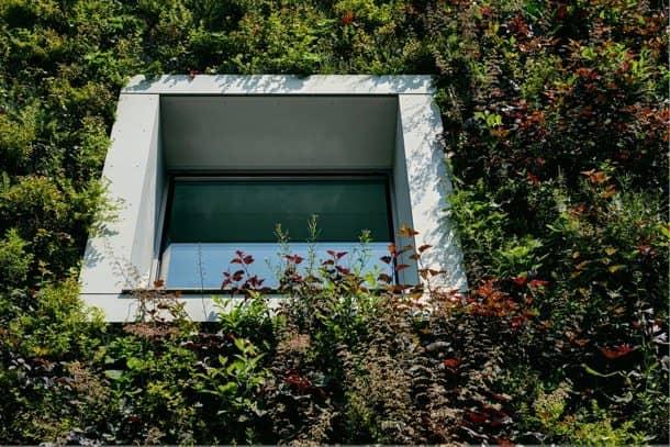 Fundacion-Ciencias-Polonia detalle vegetación ventana