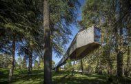 Refugios en árboles Tree Snake