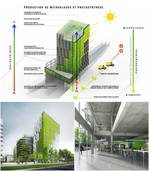 microalgas-biomasa-In Vivo