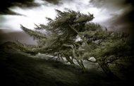 ¿Conseguir energía eólica de los árboles?