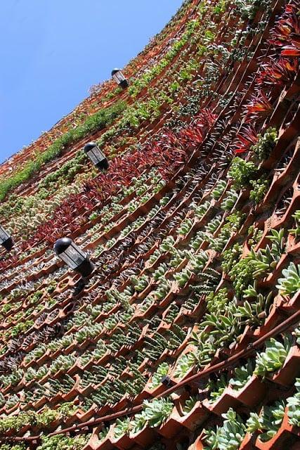 Muro ajardinado para el patio de un hotel de ibiza for Jardines verticales alicante