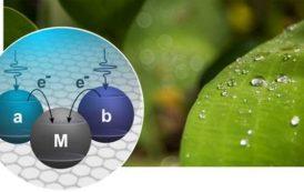 Física cuántica, fotosíntesis, y celdas solares